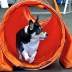 Dog-Agility-tunnel-longmont1-150x150