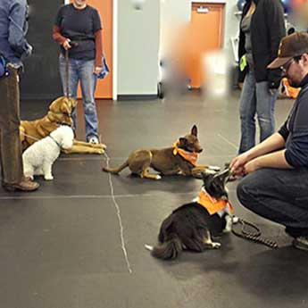 Dog-Obedience-Class-longmont