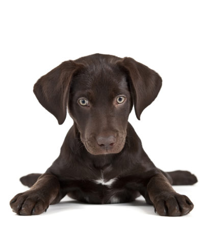 Puppy Training Classes Longmont Colorado