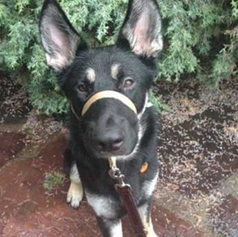Private dog training in home or at Canine Fine