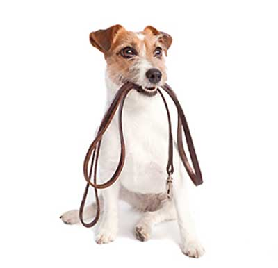 Dog Training including Leash Walking